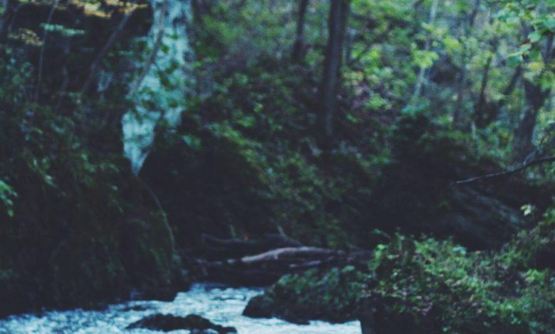 Photo de Dans la forêt de Jean Hegland : apocalypse et Nature Writing