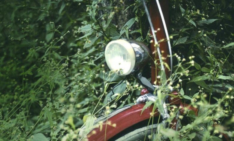 Photo of «Cet été-là» de Lee Martin : Autopsie d'un meurtre