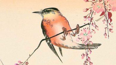 Photo of «Petits Oiseaux» de Yôko Ogawa