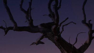 Photo of «Hugo de la nuit» de Bertrand Santini : poétique et effrayant