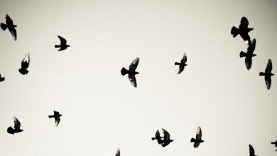 Photo de Victor Pouchet chez Finitude : des oiseaux comme prétexte