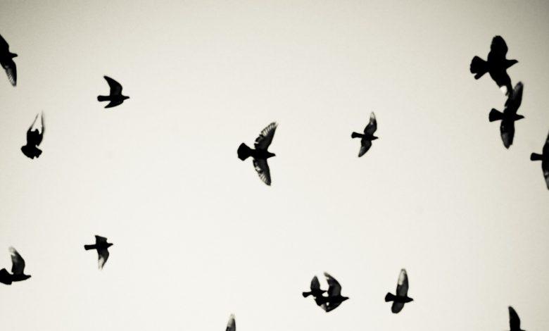Photo of Victor Pouchet chez Finitude : des oiseaux comme prétexte