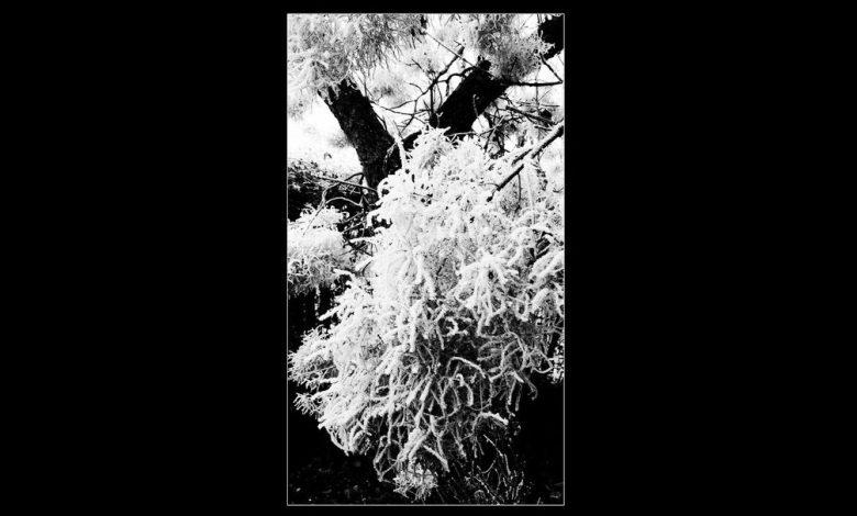 Photo of «Dirt», plongée dans l'opacité des mystérieux Black Wine Order