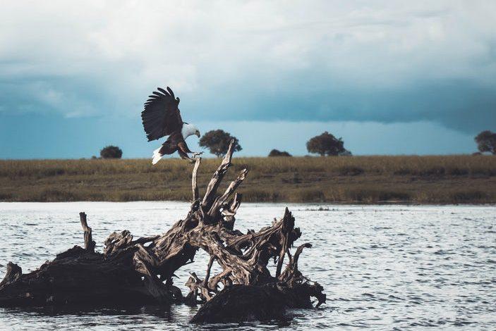 Photo of Cartographier la vie sauvage pour mieux renouer avec le vivant