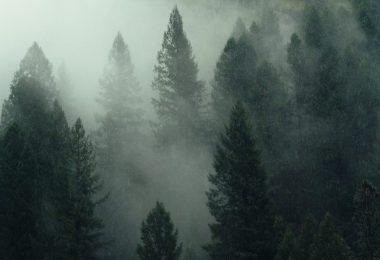 Pine Watt / Unsplash / mailer