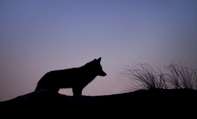 Photo de Midwinter, le solstice de la douleur