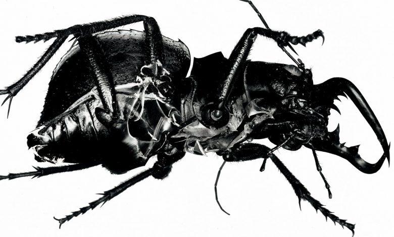 Photo of «Mezzanine» de Massive Attack : Noirceur Jumelle