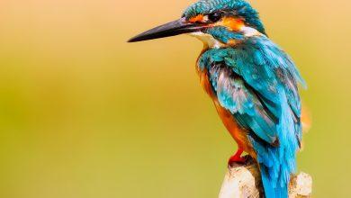 Photo de Oiseau-moi, douceur et violence d'une langue sensible
