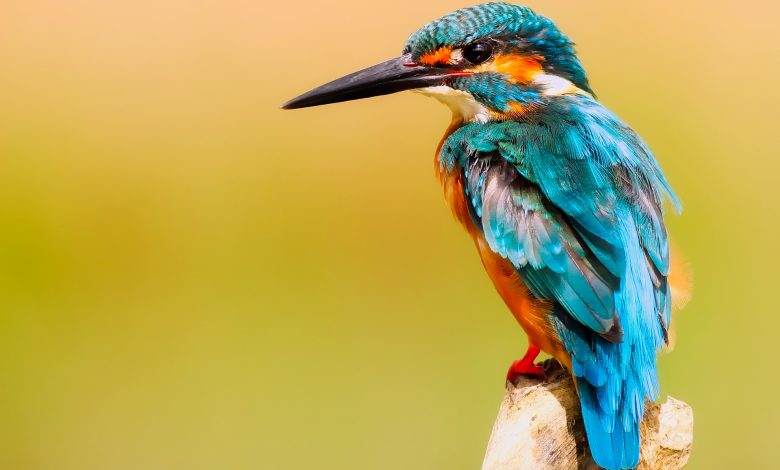 Photo of Oiseau-moi, douceur et violence d'une langue sensible