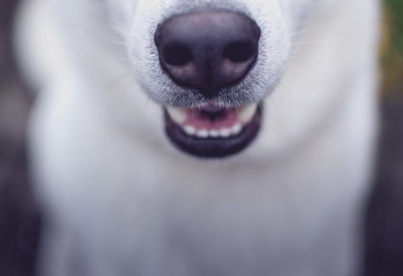 Chien-Loup