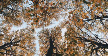 Parler avec les arbres