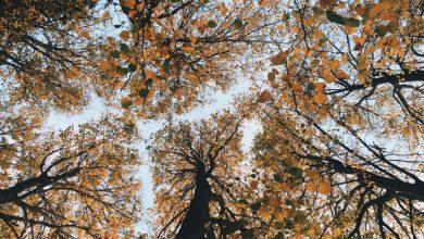 Photo of «Parler avec les arbres» de Sara Donati : la nature au plus près
