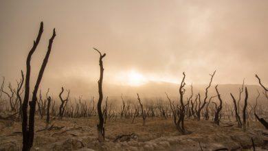 Photo of Des forêts et des hommes, «L'arbre monde» de Richard Powers
