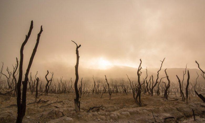 Photo de Des forêts et des hommes, «L'arbre monde» de Richard Powers