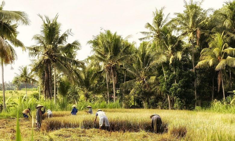 Photo of La Maison de Verre, la réalité du colonialisme à travers une fiction
