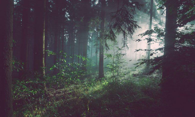 Photo of «Forêt-Furieuse» de Sylvain Pattieu, un roman novateur