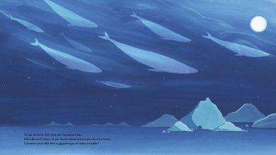Photo de «La mystérieuse baleine» de Daniel Frost, un voyage en eaux glaciales