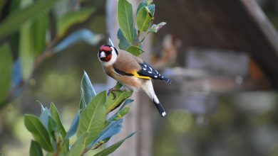 Photo de Seham Boutata, quand le chant d'un oiseau éveille tout un peuple