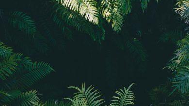 Photo of «Une République lumineuse» : fable noire sous la chaleur des tropiques