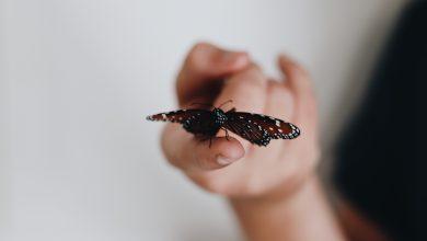 Photo de «La Fille aux papillons» de Rene Denfeld. À fleur de peau