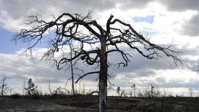 Photo of Faut-il lire «Et toujours les Forêts»de Sandrine Collette en temps de pandémie ?