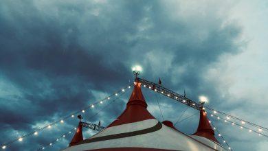 Photo de «Vladivostok Circus» : le show et l'humain